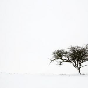 Tree in Whiteout